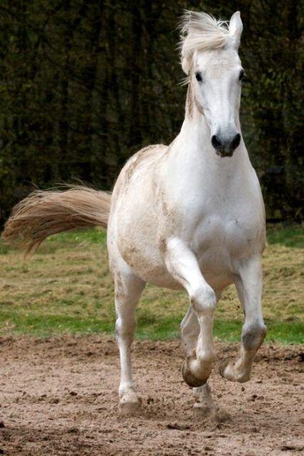 Pferde042