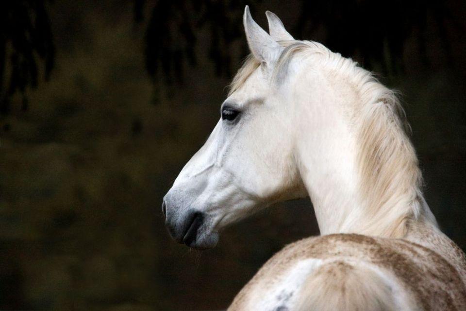 Pferde043b
